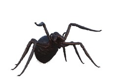 Giant fantasy monster spider in attacking pose. 3D illustration isolated on a white background.