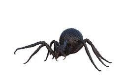 Giant fantasy monster spiderrecolied ready to pounce. 3D illustration isolated on a white background.