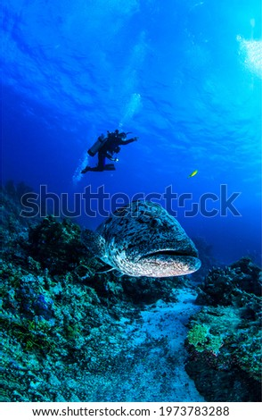 Giant fish and diver underwater. Diving scene underwater. Underwater diving. Fish with diver underwater