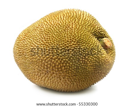 Giant jackfruit of South East Asia