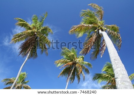 Giant palm trees on a deserted tropical island - stock photo