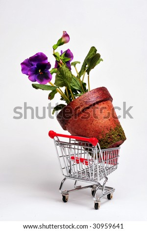 Giant Potted Plant in Cart.