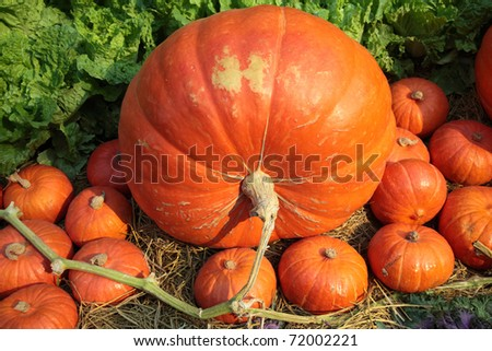 Giant Pumpkins.