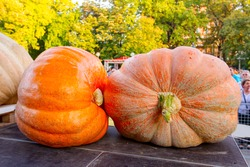 "Giant pumpkins display on stage at traditional holiday competition. ""Pumpkin days"" (""Dani ludaje "") in Kikinda city from Vojvodina, Serbia."