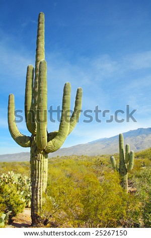 Giant Saguaro cactus, Saguaro National Park, Arizona