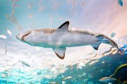 Giant scary shark with big teeth mouth under water in aquarium. Sea ocean marine wildlife predator dangerous animal swimming in blue water. Underwater life. Water nature fauna background.
