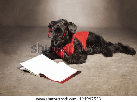 giant schnauzer with glasses reading a magazine on grunge background