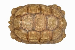 Giant Tortoise Shell, Texture of Turtle carapace. Beautiful, charming, mysterious old,For interior decoration.