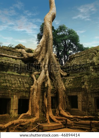 Giant tree covering the stones of the fascinating temple of Ta Prohm in Angkor Wat (Siem Reap, Cambodia).