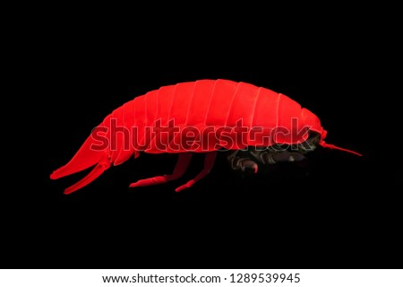 Giant underwater isopod under red light