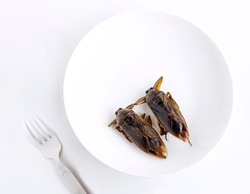 Giant Water Bug is edible insect for eating as food Insects cooking deep-fried snack on white plate with fork on gray background, it is good source of protein. Entomophagy concept.