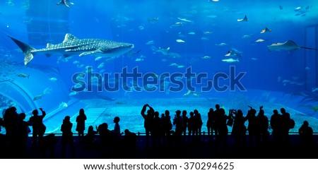 Shutterstock Giant whale shark in Aquarium