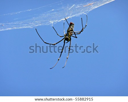 Giant Wood Spider waiting for prey in its web - stock photo