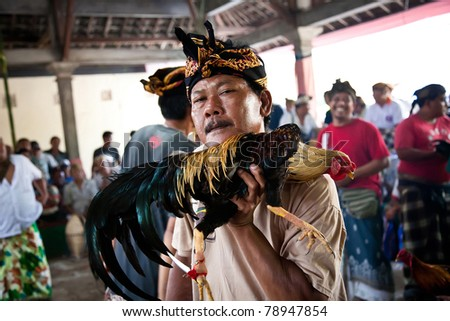 GIANYAR, BALI, INDONESIA- MAY 21: Unidentified villager displays his rooster before the fight  at the Balinese Temple during the Odalan Festival on May 21, 2011 in Gianyar, Bali, Indonesia.