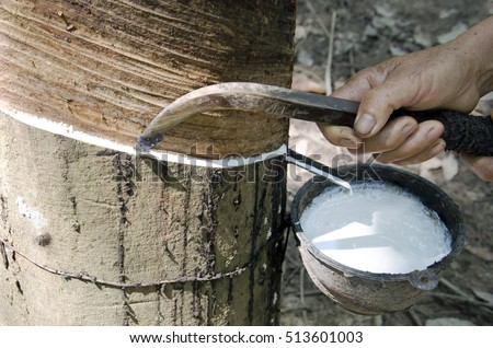 Gide hands of farmers are beginning tires with rubber cups for water timber. #513601003