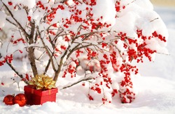 Gift Box and Christmas Balls under Holly Berries bush Covered with Snow. Winter Sunny Day.