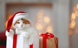Gift box with cute cat in Santa Claus hat against blurred Christmas lights