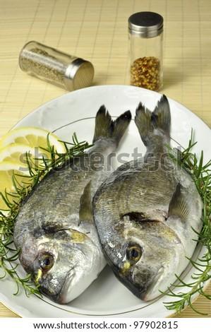 gilt-head