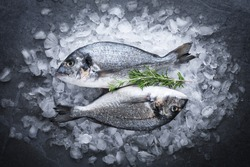 Gilt-head bream (dorade) and rosemary on ice top view.