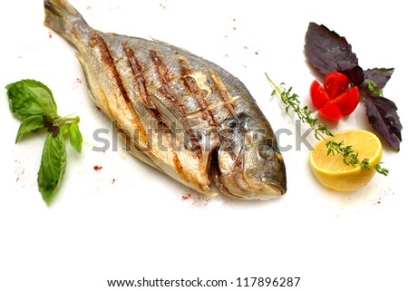 Gilt-head sea bream fish on white background