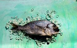 Gilthead fish on an aqua background and on ice . sharp image
