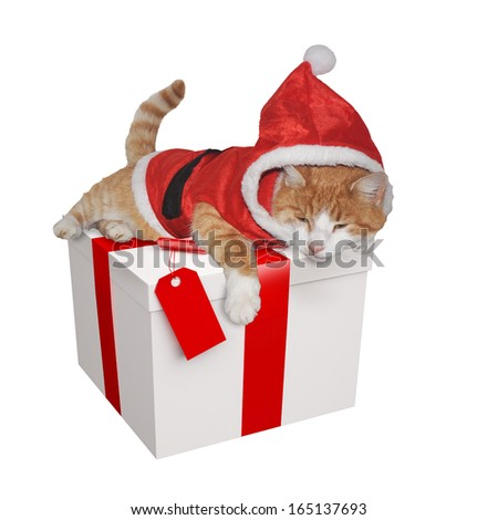 Ginger and white cat sitting on a Christmas present