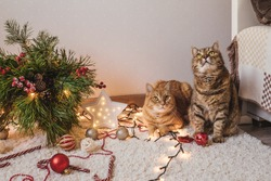 Ginger cat and brown cat are near the Christmas tree, decorations on floor. Christmas holidays and new year concept.