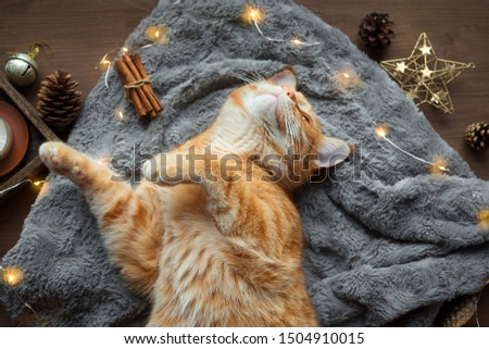 Ginger cat and Christmas garland, winter cozy composition. Seasonal Christmas coziness with cat, soft plaid, garland and pine cones. Cozy home and hygge concept.
