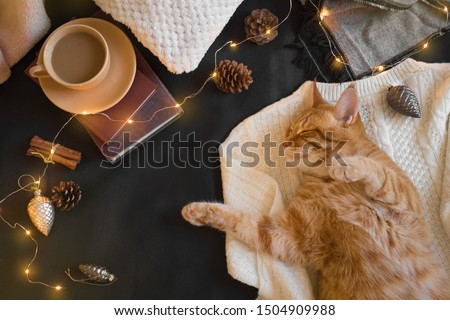 Ginger cat and Christmas winter cozy composition. Seasonal Christmas coziness with cat, soft plaid, garland, coffee and pine cones. Cozy home and hygge concept.