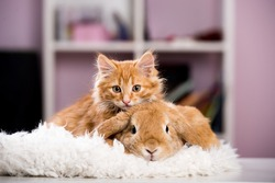 Ginger cat and rabbit playing together. Happy red pets isolated on blue.