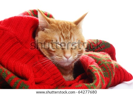 Ginger cat and red sweater