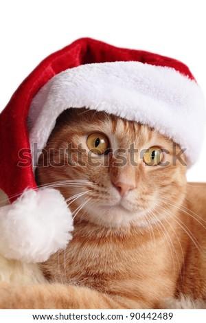 Ginger cat in christmas cap