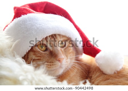 Ginger cat in christmas cap