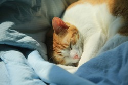 ginger cat in deep sleep under sunlight