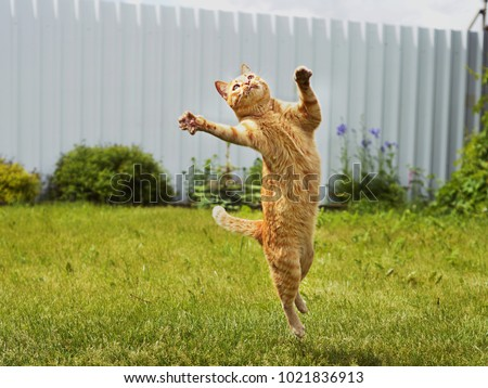 Ginger cat in jumping on green grass or dancing cat - Shutterstock ID 1021836913