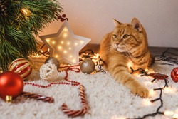 Ginger cat lie near the Christmas tree, decoration on floor artound. Christmas holidays and new year concept.