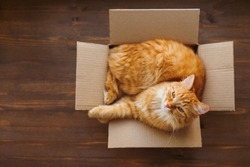 Ginger cat lies in box on wooden background. Fluffy pet is going to sleep there.