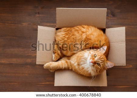 Ginger cat lies in box on wooden background. Fluffy pet is going to sleep there.  Сток-фото ©