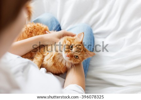 Ginger cat lies on woman\'s hands. The fluffy pet comfortably settled to sleep or to play. Cute cozy background with place for text. Morning bedtime at home. Soft focus.