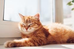 Ginger cat lying on empty bed at home in the morning. Pet enjoying sun. Kitten sleeping