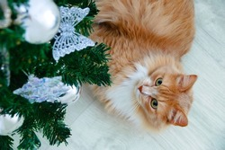 Ginger cat lying on the floor of the room under the Christmas tree with decorations.
