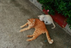 Ginger cat mom with her child lying on the floor