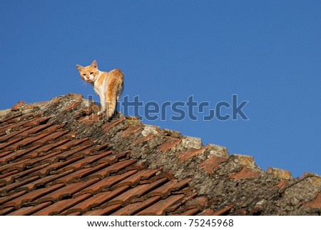 Ginger cat on the roof on clear sky background