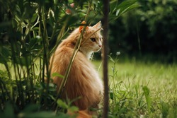 Ginger cat sitting on a grass