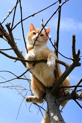 Ginger cat sitting on a willow.