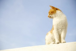 Ginger cat sitting on the roof with blue sky background
