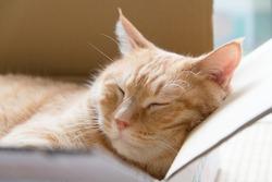 Ginger cat sleeping in cardboard box