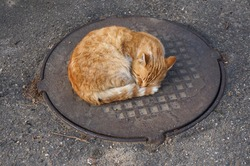 Ginger cat sleeps on the hatchway. It's warmer here. Spring, but still cold in Tuapse, Russia.