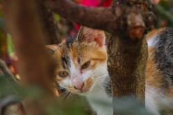 ginger cat slumped over a branch stuck in a cherry tree