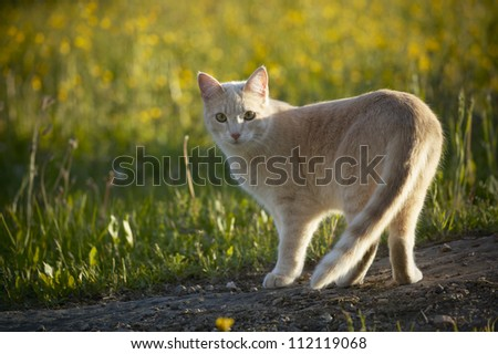 Ginger cat standing in nature